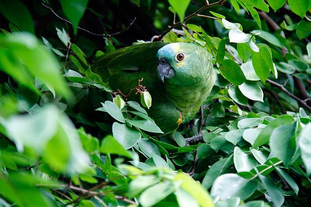 papoušek v listí
